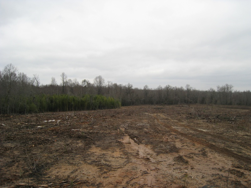 Timber Reforestation